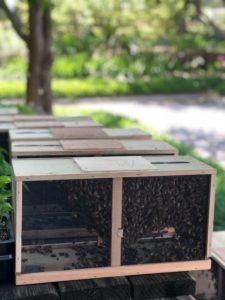 Cover photo for Bees! Bees! and More Bees!