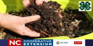 Cover photo for Basics of Vermicomposting