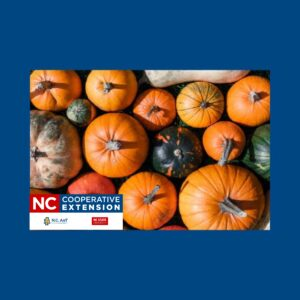 Cover photo for 4-H Youth Clover Class Series Pumpkin Planting