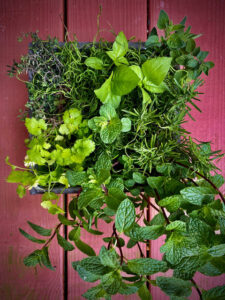 Cover photo for Re-Framing Your Vertical Garden
