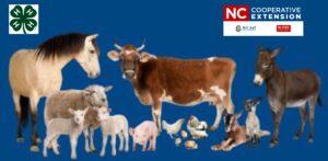 Cover photo for 4-H Clover Class Series - Livestock 101